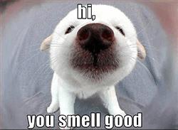 mannen kunnen je geur heel geil vinden